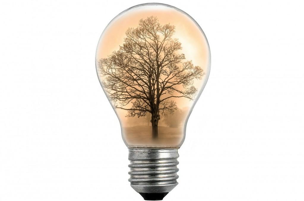 bulb-313715_1280