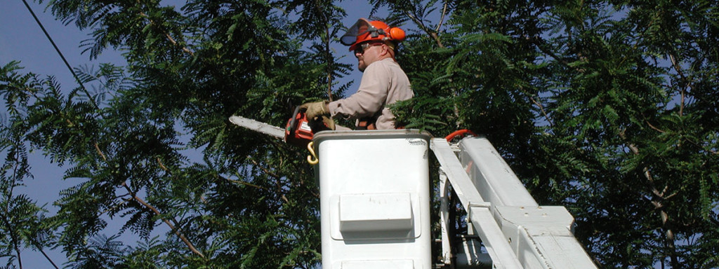 tree-trimmer_1